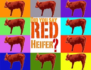 say_red_heifer